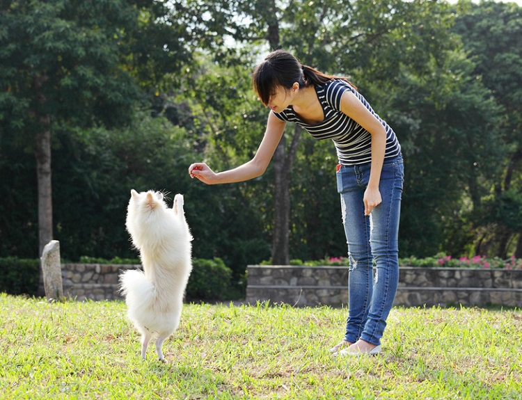 How To Train Your Dog To Be Civilized
